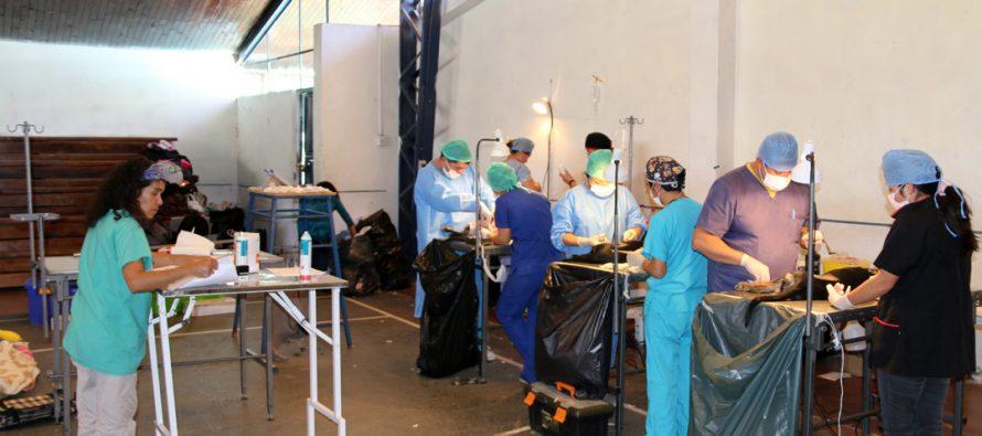 Más de 240 mascotas se operaron en la esterilización realizada en el Estadio Techado