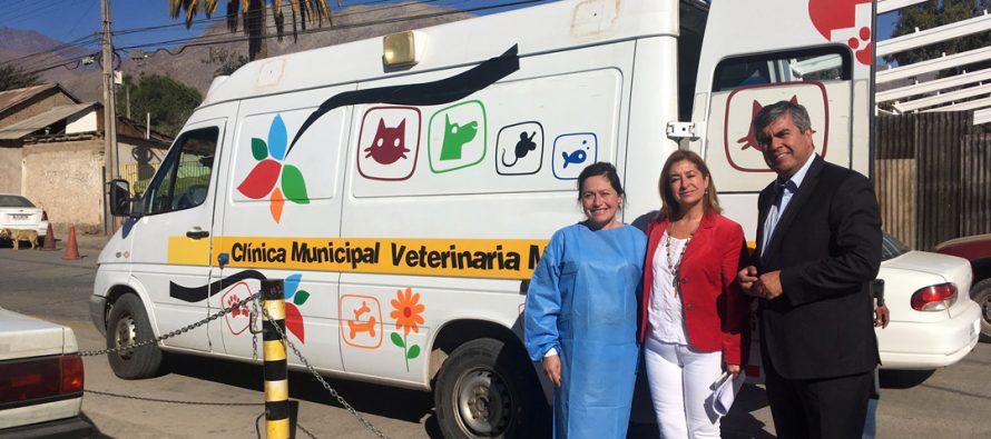 Región de Coquimbo suma 22 mil esterilizaciones del Programa de Tenencia Responsable de Mascotas