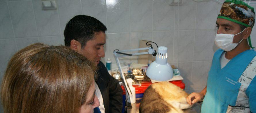 Esterilizan 380 mascotas en la comuna de Paihuano a través de SUBDERE