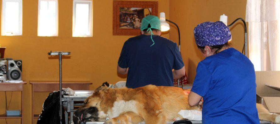 Con decenas de mascotas esterilizadas culminó un nuevo operativo en la comuna de Vicuña