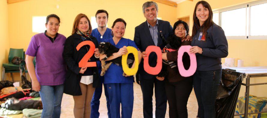 Con 3 mil mascotas esterilizadas culminó el programa financiado por la SUBDERE en Vicuña
