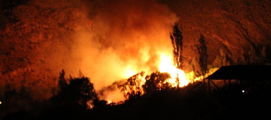 Fiscalía de Vicuña inicia investigación por incendio en Fundo Los Nichos de Pisco Elqui