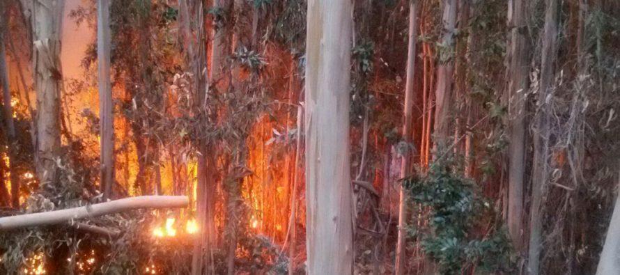 Incendio arrasa con siete hectáreas en El Almendral y deja a dos bomberos lesionados