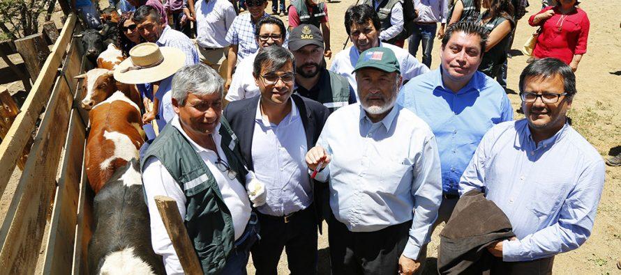 SAG declara a las regiones de Atacama y Coquimbo  libres de brucelosis bovina
