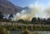 70 mil metros cuadrados de árboles han sido consumidos por el fuego en El Almendral