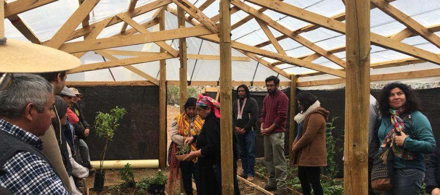 Con invernadero ecológico comunidad indígena de Cochiguaz promueve cultivos sustentables