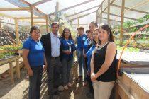 Mujeres vicuñenses emprenden con hortalizas hidropónicas en el corazón del Valle de Elqui