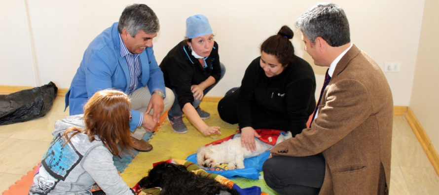 Mil esterilizaciones caninas y felinas gratuitas se realizarán durante el primer trimestre en Vicuña