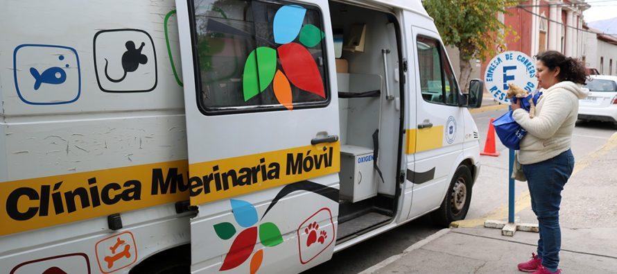 Comenzaron las consultas veterinarias gratuitas cada miércoles y viernes en municipio de Vicuña