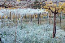 Pronostican extensión de heladas hasta el lunes en el Valle del Elqui