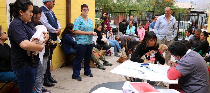 En Los Andenes comenzaron las esterilizaciones caninas y felinas de la comuna de Vicuña