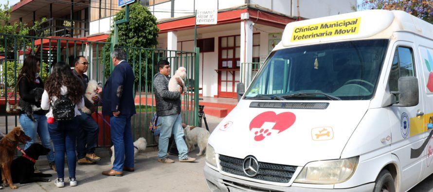 Un total de 97 mascotas pudieron ser vacunadas gratuitamente contra la rabia en Vicuña