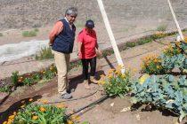INDAP destaca labor de productora serenense y su huerto agroecológico en Cutún