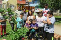 Vecinos de Vicuña y Carabineros se unieron para reforestar espacio público