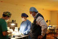 Desde este jueves se retoman los operativos de esterilización en la comuna de Vicuña
