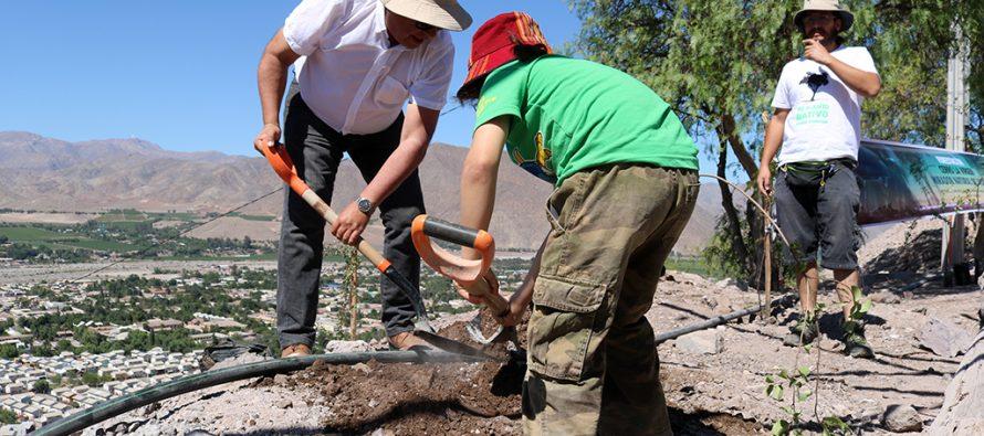 Cerro de la Virgen es reforestado con la plantación de 200 árboles nativos