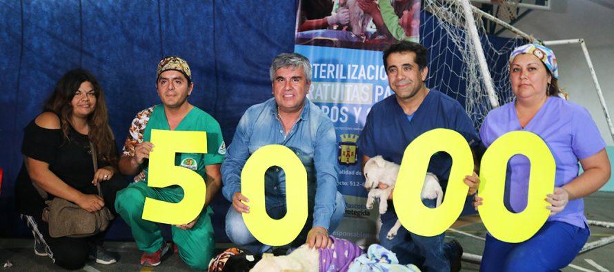 Vicuña llegó a la meta de 5000 mascotas esterilizadas en los últimos 3 años