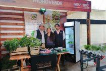 Emprendimiento Hidroverde en Bellavista: En busca de la inocuidad alimentaria