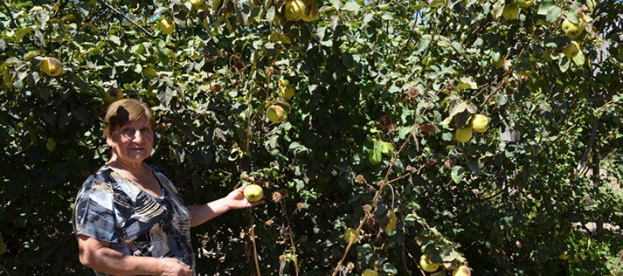 Campesina de Vicuña saca adelante a su familia gracias a la diversificación de productos