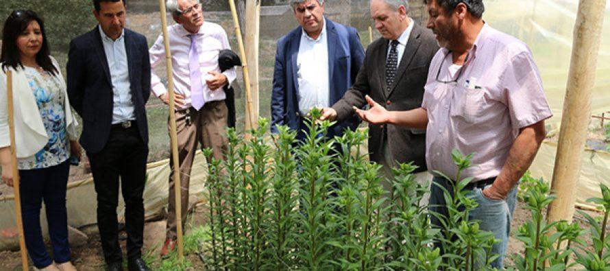 El municipio de Vicuña organiza su primer taller de jardinería inclusivo