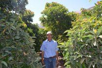 Aquiles Pinto y su paraíso verde en el sector La Campana de Vicuña