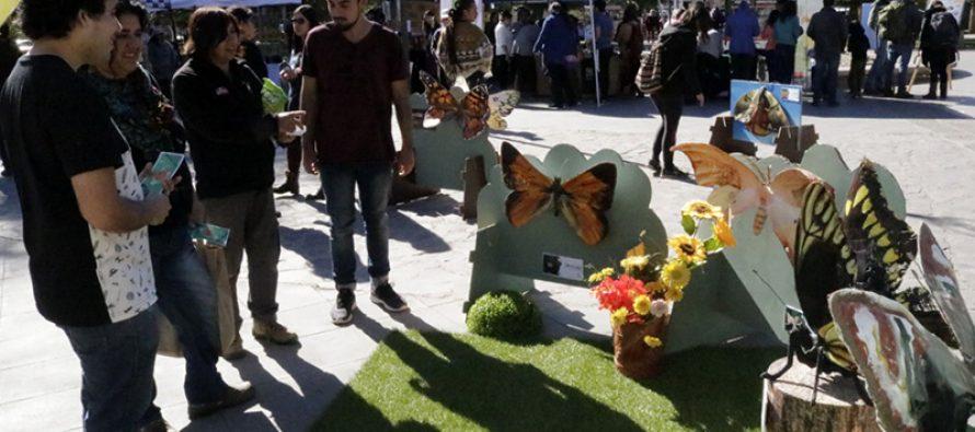 Con mariposas gigantes y diversas muestras Vicuña celebró el Día del Medio Ambiente