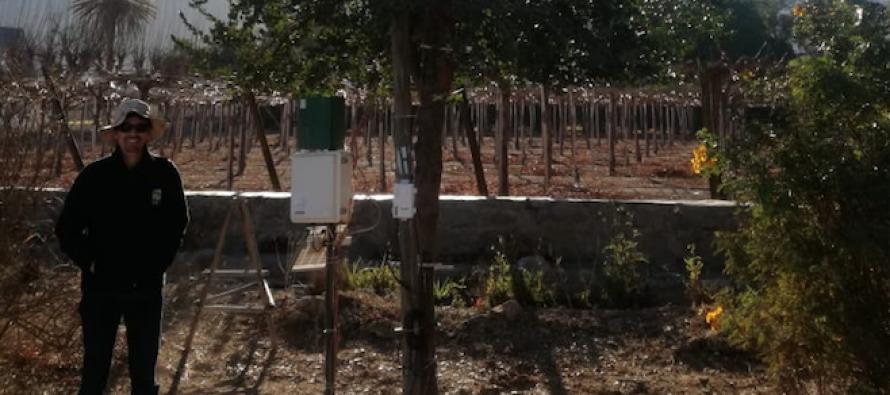 Vicuña: Investigador de INIA mide efecto del eclipse en árbol endémico de Chile