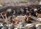 Crianceros de Vicuña desolados por la sequía que ha producido la muerte de sus animales