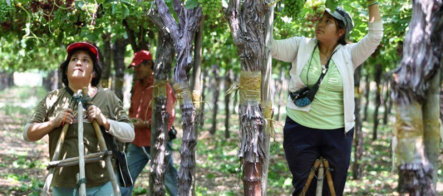 Trabajadores de Vicuña adquieren nuevos conocimientos  con miras a la reconversión laboral