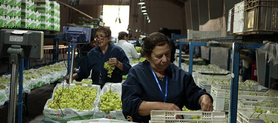 Comienza una nueva temporada agro-frutícola en el Valle de Elqui