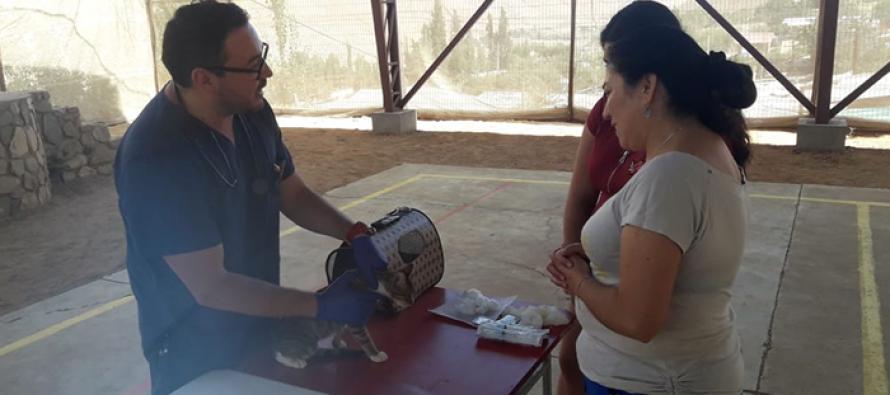 Más de 200 esterilizaciones de mascotas se realizarán en Paihuano