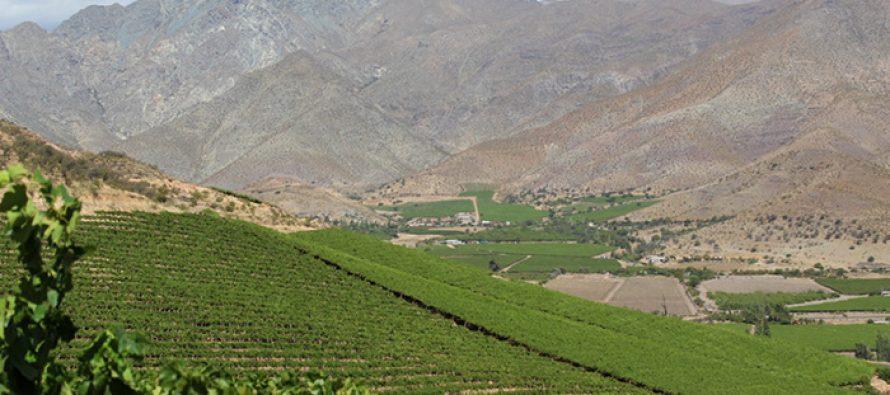 SAG levanta nuevo sistema de registro agrícola y llama a declarar las plantaciones de vides con su ubicación geoespacial