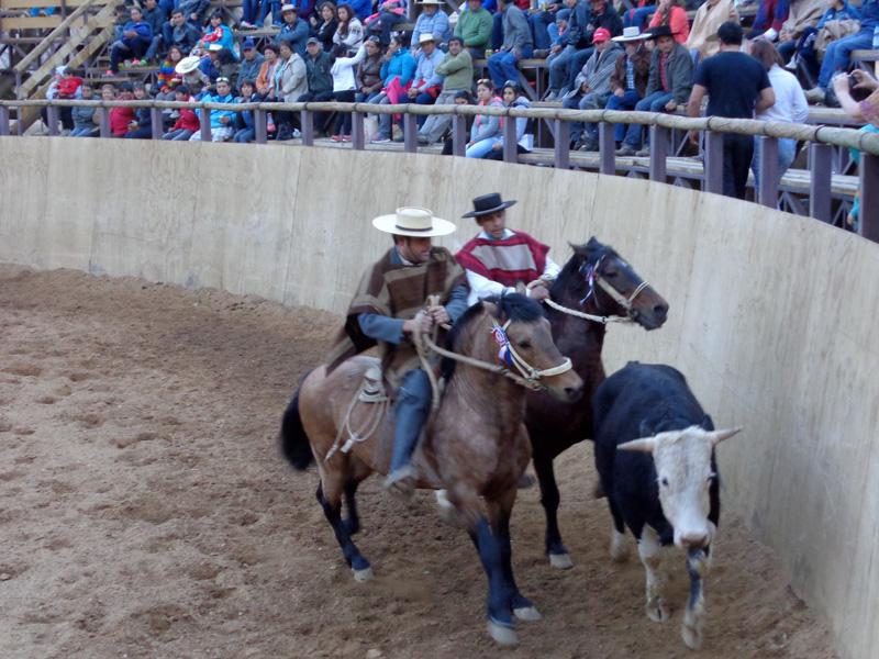 Photo of Horcón fue el epicentro de una nueva versión de la Fiesta Huasa y Rodeo 2014