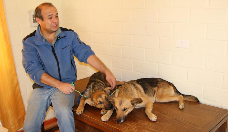 Photo of Operativo de esterilización de perros y gatos se realizará la próxima semana en Paihuano