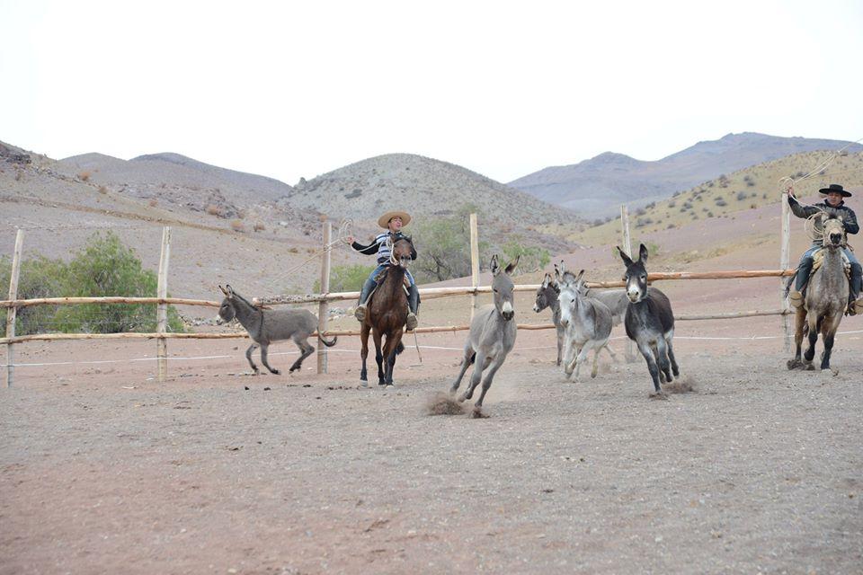 Photo of Sabores de campo se toman el fin de semana largo en El Durazno y Gabriela Mistral
