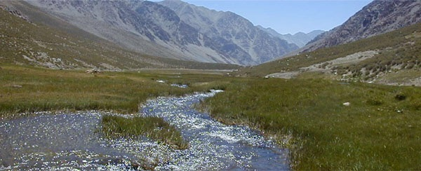 Photo of Declaran Santuario de la Naturaleza a Estero Derecho de Paihuano