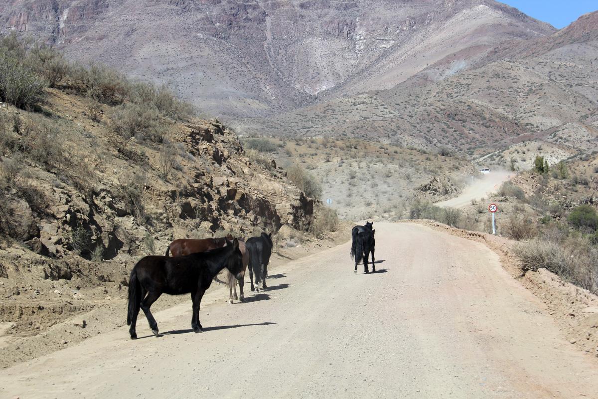 Photo of Camino a Cerro Tololo