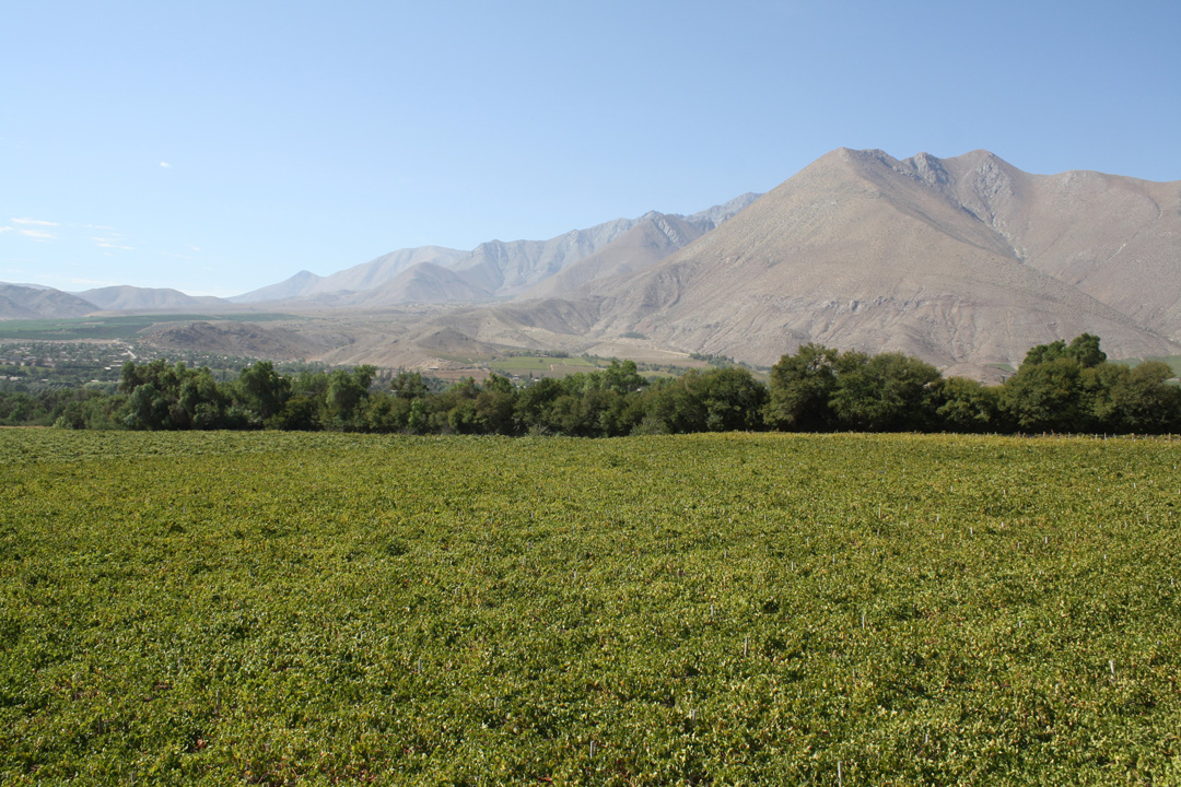 Photo of LLuvias fuera de temporada no afectaron producción de fruta en la región de Coquimbo