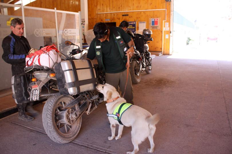 Photo of SAG apoya su labor en control fronterizo de Agua Negra con brigada canina