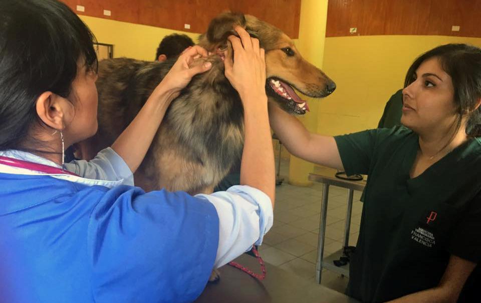 Photo of Desarrollan operativo gratuito de vacunación y desparasitación canina en Marquesa
