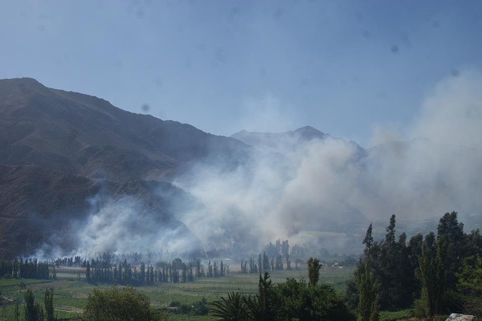 Photo of Incendio forestal consumió cinco hectáreas de vegetación en Paihuano