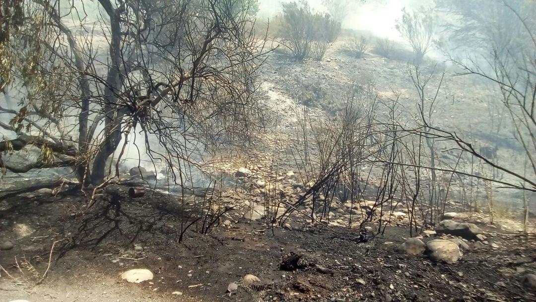 Photo of Diputado Walker pide más recursos para combate de Incendios Forestales y para pequeños productores campesinos del Secano