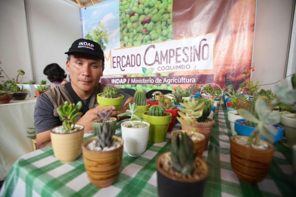 Photo of Jardines secos: La atractiva propuesta con  la que vecino de Las Ánimas cautiva en su emprendimiento
