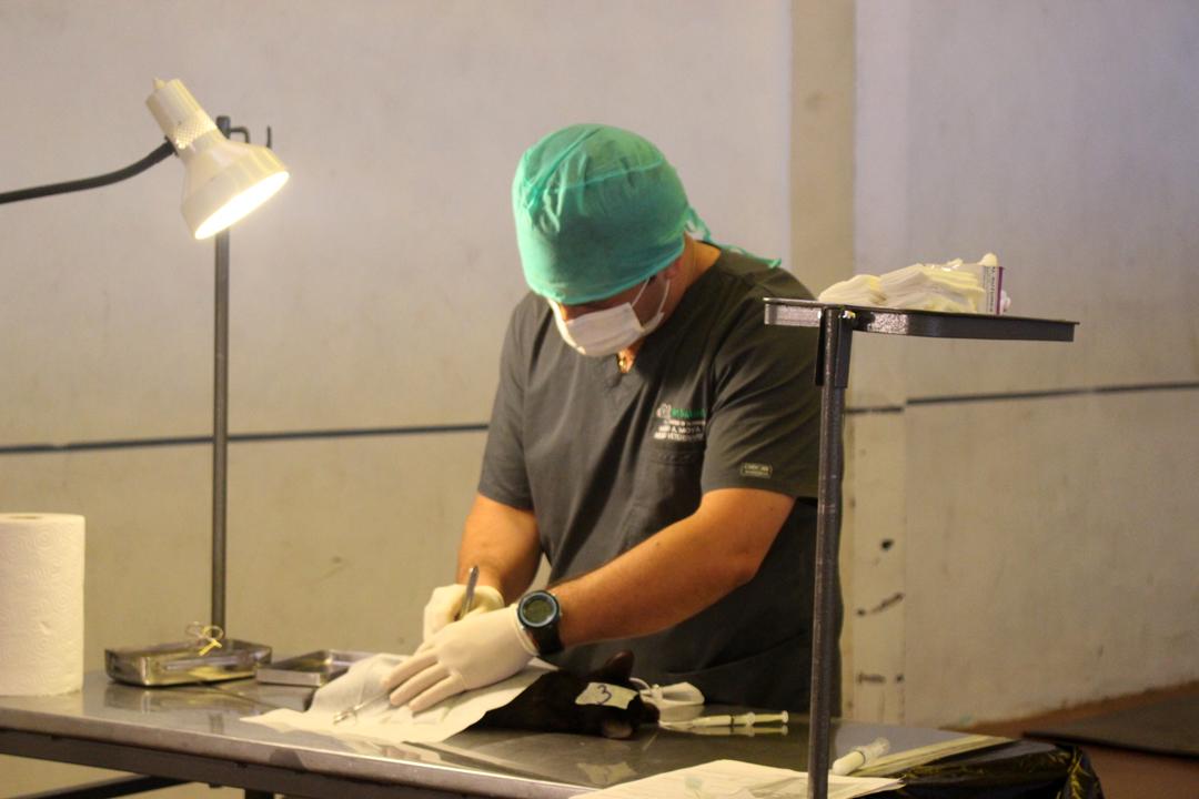 Photo of Siguen las esterilizaciones caninas y felinas que se  han realizado en toda la comuna de Vicuña