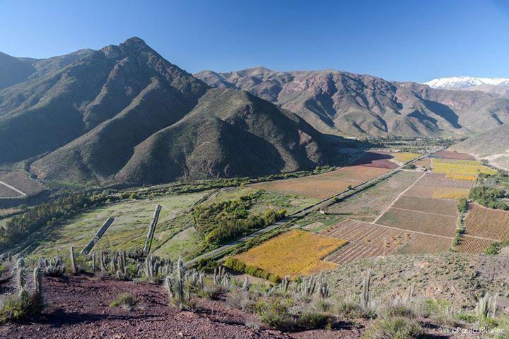 Photo of Colorido Valle del Elqui