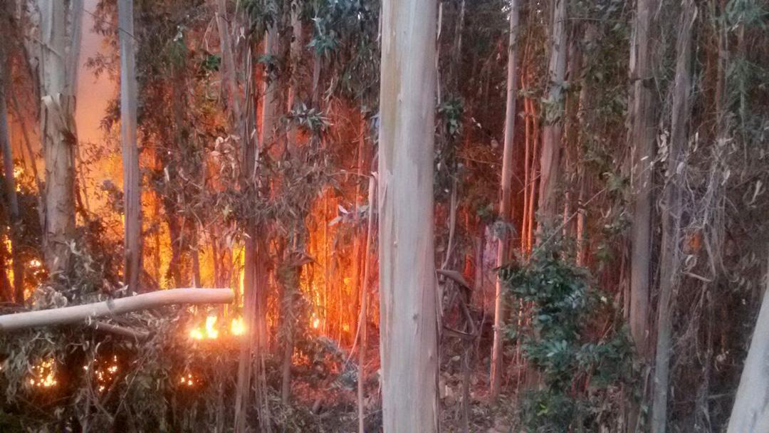Photo of Incendio arrasa con siete hectáreas en El Almendral y deja a dos bomberos lesionados
