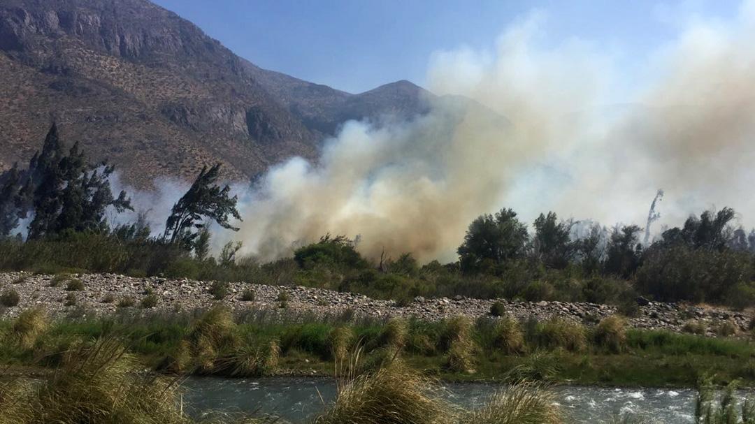 Photo of 70 mil metros cuadrados de árboles han sido consumidos por el fuego en El Almendral