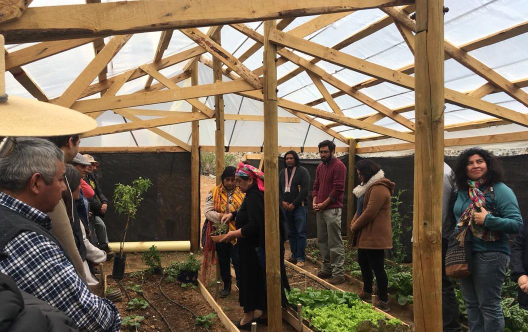 Photo of Con invernadero ecológico comunidad indígena de Cochiguaz promueve cultivos sustentables