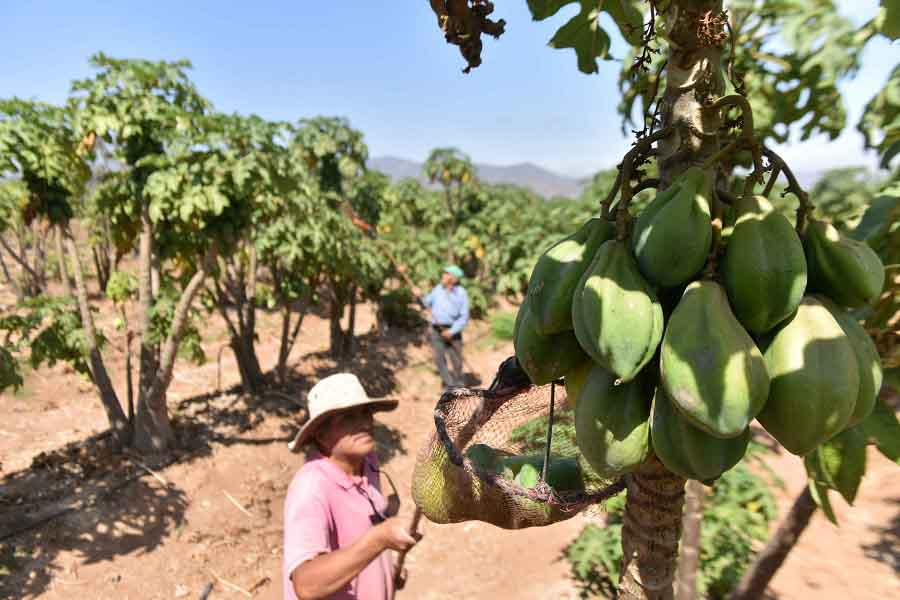 Photo of AMRC: En seminario analizarán los desafíos que enfrenta el desarrollo rural
