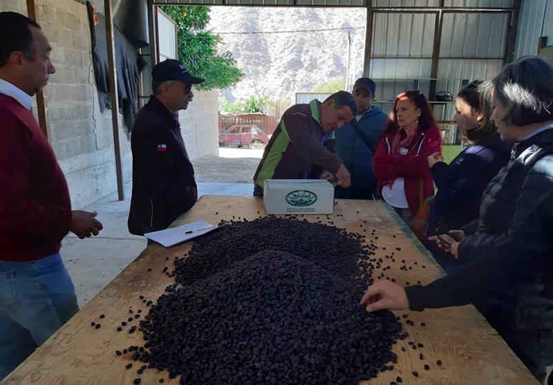Photo of Dirigentes de INDAP conocen exitosos proyectos agropecuarios y de turismo en Paihuano